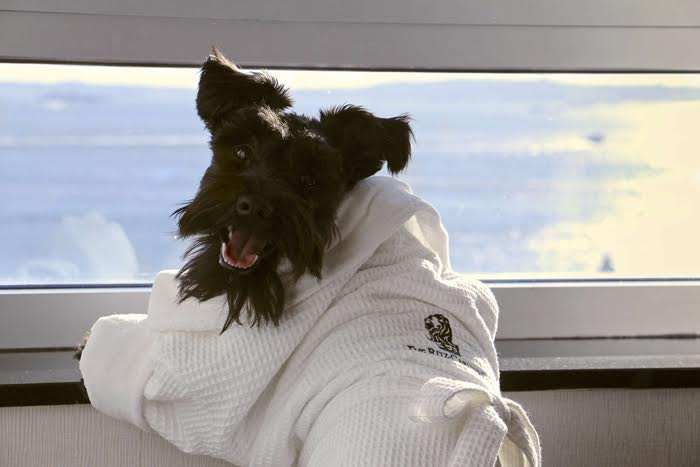 The Ritz-Carlton New York, Battery Park is not only pet friendly but accommodating to all family members as well.